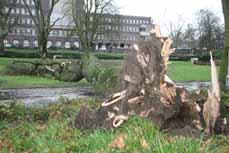 Bild: Diesen Baum hat