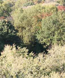 Bild: Rund 35 Hektar Wald werden durchforstet.