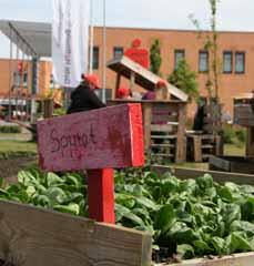 Bild: Der Spinat sieht schon mal gut aus...(Foto: Stadt Oberhausen)